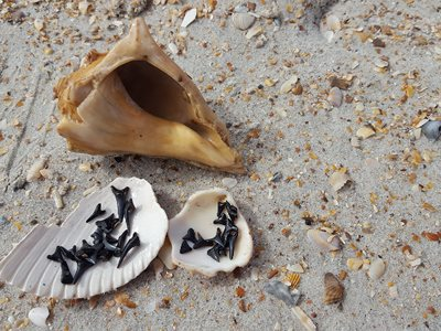 See what you can find on the beach!