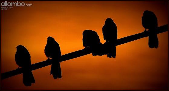 AngryBirds.