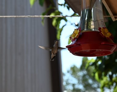 humming bird at our feeder