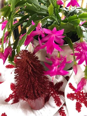 Christmas Cactus in bloom