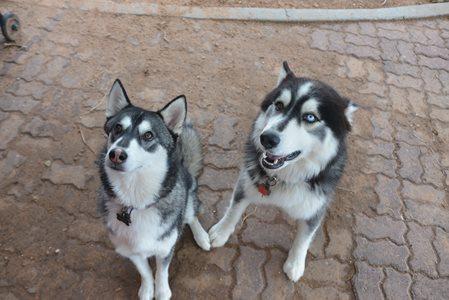 My Dogies