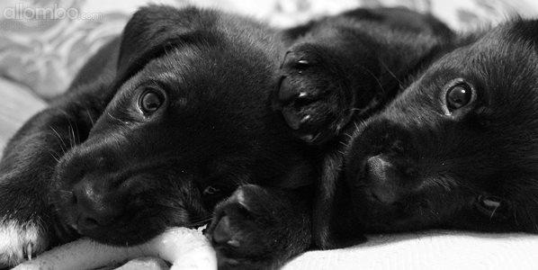 Foster pups