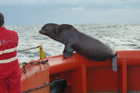 Social distancing at sea
