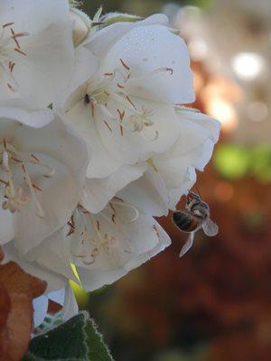 Buzzy Bee