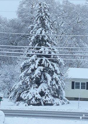 Snowy New York winter!