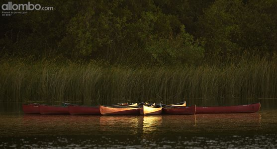 Canoes at golden hour