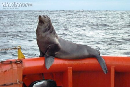 This site has my Seal of Approval